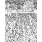 Illustration (10) Pepper_S