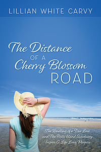 The Distance of a Cherry Blossom Road