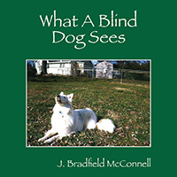 What A Blind Dog Sees